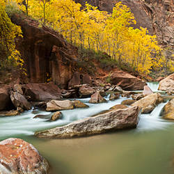 Cottonwood trees and rocks along Virgin River, Zion National Park, Springdale, Utah, USA