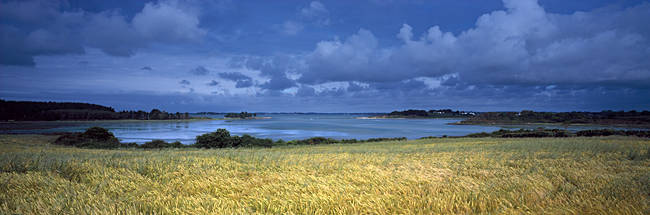 Wheatfield at a coast, Golfe Du Morbihan, Vannes, Morbihan, Brittany, France