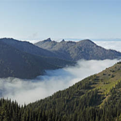Trees on mountain, Hurricane Ridge, Olympic National Park, Washington State, USA