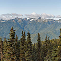 Mountain range, Olympic Mountains, Hurricane Ridge, Olympic National Park, Washington State, USA