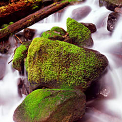 Cascading waterfall in a rainforest, Olympic National Park, Washington State, USA