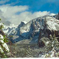 Snowy trees in winter, Yosemite Valley, Yosemite National Park, California, USA