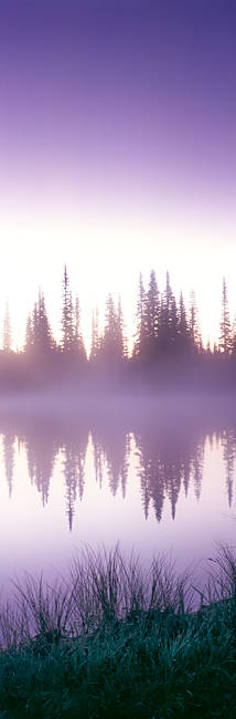 Reflection of trees in a lake, Mt Rainier, Mt Rainier National Park, Pierce County, Washington State, USA