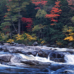 Waterfall in a forest, Swift River, Conway, Carroll County, New Hampshire, USA