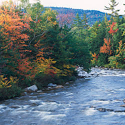 River flowing through a forest, Swift River, Conway, Carroll County, New Hampshire, USA