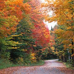 Trees at both sides of a road, Percy, New Hampshire, USA