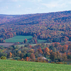 Trees on a hill, Adams, Berkshire County, Massachusetts, USA