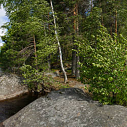 Trees on an island in a lake, Lake Miettula, Rapojarvi, Kouvola, Finland