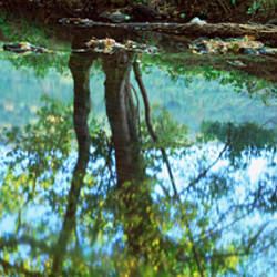 Reflection of trees in a river, River Teign, Dartmoor, Devon, England