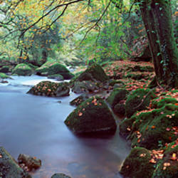 River flowing through a forest, River Avon, Dartmoor, Devon, England