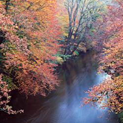 River flowing through a forest, River Dart, Dartmoor, Devon, England