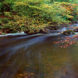 River flowing through a forest, River Meavy, Dartmoor, Devon, England