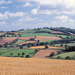 Patchwork of a field, Cadeleigh, Mid Devon, Devon, England