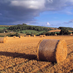 Hay bales in a field, Devon, England