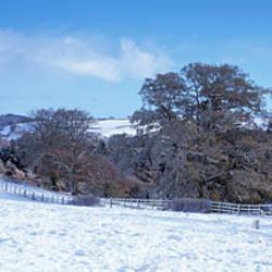 Trees in a snow covered field, Bickleigh, Mid Devon, Devon, England