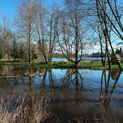 Reflection of trees in the lake, Fairview, Multnomah County, Oregon, USA