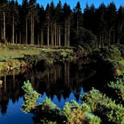 River flowing through a forest, East Dart River, Dartmoor, Devon, England