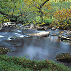 River flowing through a forest, West Dart River, Dartmeet, Devon, England