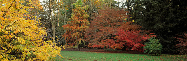 Autumn trees in Westonbirt Arboretum, Gloucestershire, England