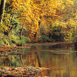 River flowing through a forest with autumn trees, River Teign, Dartmoor, Devon, England