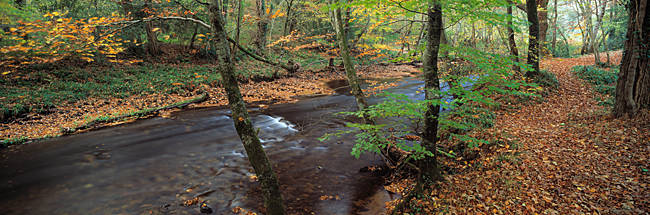 River flowing through a forest in autumn, River Teign, Dartmoor, Devon, England