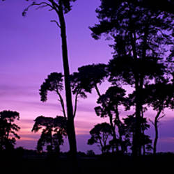 Silhouette of Elveden War Memorial and Scots Pines at sunset, A11, Elveden, Suffolk, England