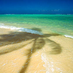 Shadow of palm tree on the beach