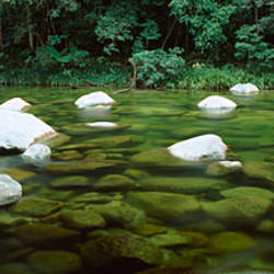 Stream in a forest, Mossman Gorge, Daintree National Park, Queensland, Australia