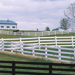 Barn and fences in a field, Lexington, Fayette County, Kentucky, USA