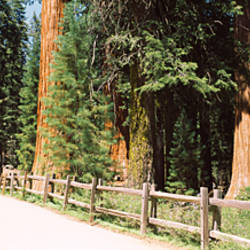 Hiking trail in a forest, Sequoia National Park, California, USA