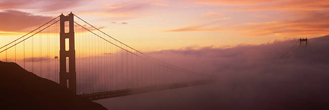 Suspension bridge covered with fog viewed from Hawk Hill, Golden Gate Bridge, San Francisco Bay, San Francisco, California, USA