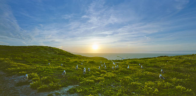 Seagulls on the coast at sunset, Anacapa Island, Channel Islands National Park, Santa Barbara County, California, USA
