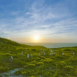 Seagulls on the coast at sunset, Anacapa Island, Channel Islands National Park, Santa Barbara County, California, USA