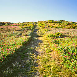 Pathway in a field, Anacapa Island, Channel Islands National Park, Santa Barbara County, California, USA