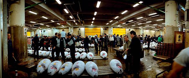 Customers examining tuna in a fish market, Tsukiji Fish Market, Tsukiji, Tokyo Prefecture, Kanto Region, Honshu, Japan