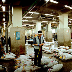 Sellers preparing tuna in a fish market, Tsukiji Fish Market, Tsukiji, Tokyo Prefecture, Kanto Region, Honshu, Japan