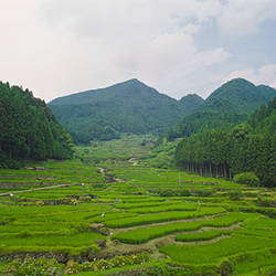 Terraced rice fields, Yotsuya Senmaida, Shinjo City, Aichi Prefecture, Chubu Region, Honshu, Japan