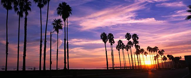 Silhouette of palm trees at sunset, Santa Barbara, California, USA