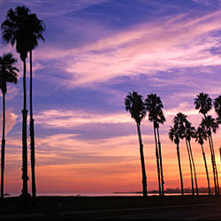 Silhouette of palm trees at sunset, Santa Barbara, California, USA