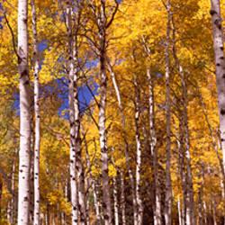 Forest, Grand Teton National Park, Teton County, Wyoming, USA