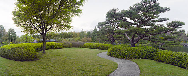 Trees in a garden, Japanese Garden, Showa Memorial Park, Akishima, Tokyo Prefecture, Japan