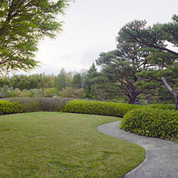 Trees in a garden, Japanese Garden, Showa Memorial Park, Akishima, Tokyo Prefecture, Japan
