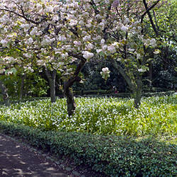 Garden path, Imperial Palace - Tokyo, Tokyo Prefecture, Japan