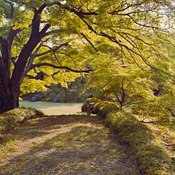 Trees in a garden, Rikugien Garden, Tokyo Prefecture, Japan