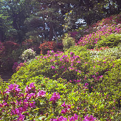 Trees and plants in a garden, Rikugien Garden, Tokyo Prefecture, Japan