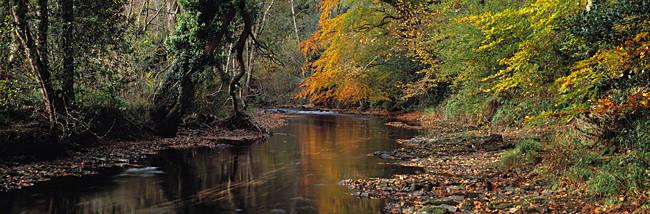Reflection of autumn trees in a river, River Teign, Dunsford, Dartmoor, Devon, England