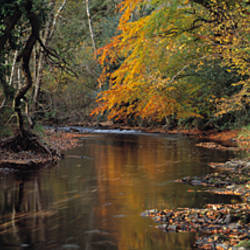 Reflection of autumn trees in a river, River Teign, Dunsford, Dartmoor, Devon, England