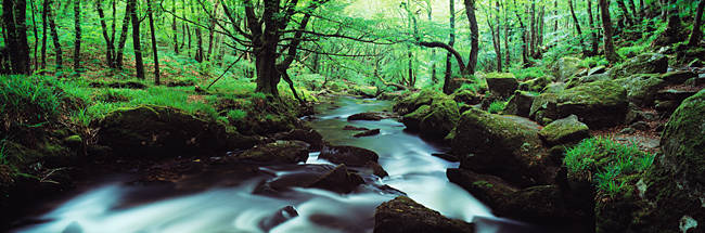 Waterfall in a forest, Golitha Falls, River Fowey, Cornwall, England