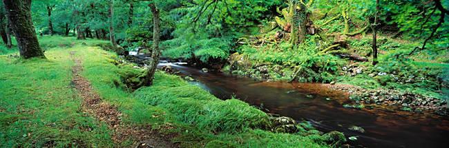 River flowing through a forest, River Tavy, Dartmoor, Devon, England
