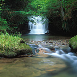 Waterfall in a forest, Watersmeet, North Devon, Devon, England